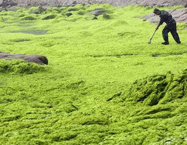 China%20algae%20photo%20AP%202